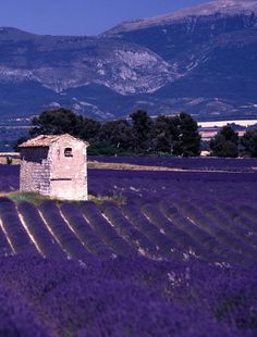 Lavender has been used throughout the Provence region of southern France for decades Places Around The World, Oh The Places You'll Go, Places To Travel, Travel Destinations, Places To Visit, Around The Worlds, Belle France, Miss France, Beautiful World