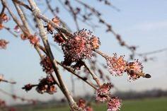 Elm, o floral para quem está sobrecarregado demais.