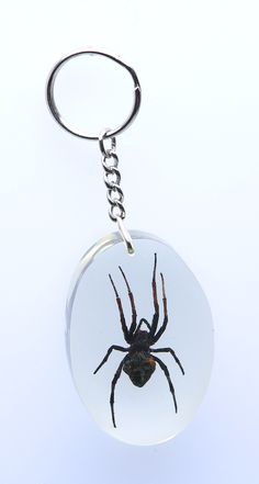 KEY RINGS -Pack of 3 exotic insect key chains.£17.89 On Sale