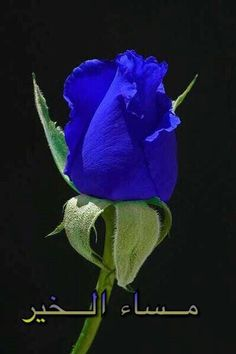 The Blue Moon Rose. by cathysapp- A blue rose? Not sure if this is real or photoshopped but what a beautiful color! Exotic Flowers, Amazing Flowers, Beautiful Roses, Beautiful Flowers, Pretty Roses, Simply Beautiful, Absolutely Gorgeous, Blue Moon Rose, Purple Rose