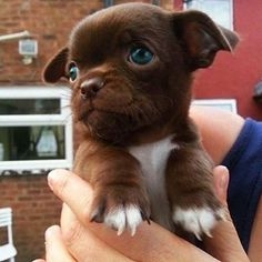Look at those socks!    #dogs #puppy #cute
