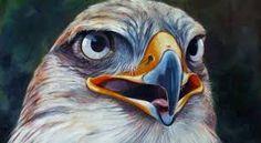 Afbeeldingsresultaat voor roof vogels tekenen en schilderen