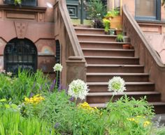 Curb Appeal: 11 Front Garden Ideas to Steal from Brooklyn: Gardenista