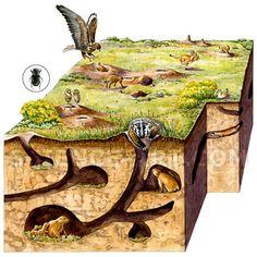 image result for rabbit burrow diagram egg exhibition pinterest rh pinterest com Rabbit Body Parts Diagram Rabbit Hole Diagram