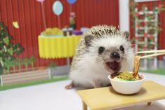 Turbo n'a qu'un an mais déjà plus de 52.000 fans sur Instagram. Ce hérisson miniature, adopté par la JaponaiseAshley Chiu, fait sensation sur le site de partage de photos. Les clichés pris par la jeune femme de 24 ans mettant en scène le petit animal réjouissent les internautes accro des animaux. Retrouvez le compte Instagram de Turbo ici.Retrouvez Animal Story surFacebook,TwitteretInstagram.DÉCOUVREZ NOS DERNIERS CONTENUS ANIMAL STORY:Inventaire en cours au zoo de Londres:Deux fois…