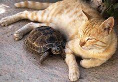 peaceful coexistence..