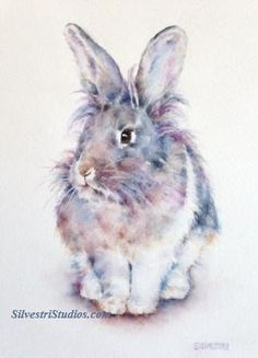 Jack, a lionhead bunny rabbit, is available as a watercolor print and greeting cards.  Perfect for the bunny art nursery or anyone who loves bunnies for their decor! He is a rescue rabbit from the wonderful East Bay Rabbit Rescue in California.   For more information, visit www.SilvestriStudios.com