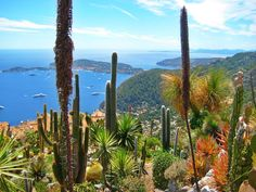 21 Best Gardens Jardin Exotique D Eze Provence Images Provence