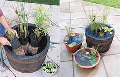 How to DIY Mini Garden Pond in a Container 3 Container Gardening, Container Pond, Container Water Gardens, Small Water Gardens, Garden Ponds, Diy Garden Fountains, Garden Hose, Garden Landscaping, Whiskey Barrels