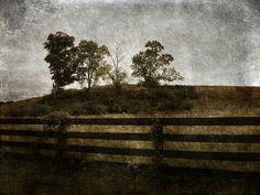 Four on a Hill. cynthia-lassiter.artistwebsites.com