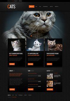 Cat Moto CMS Website Template #pets #shop #blog #html http://www.templatemonster.com/moto-cms-html-templates/41603.html?utm_source=pinterest&utm_medium=timeline&utm_campaign=cat