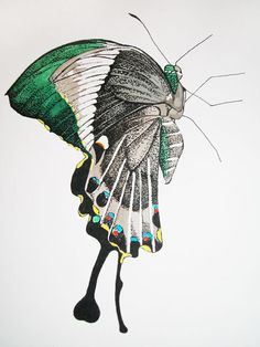 Green-Banded Swallowtail Illustration by Sarah Whittle, via Behance