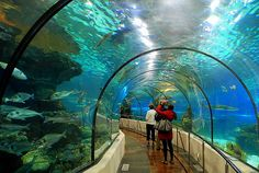 Barcelona Aquarium - Located at Port Vell, the Aquarium is on of the most visited sights in the city.