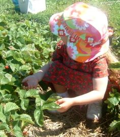 Site link to a list of organic u-pick day trips in or around illinois.