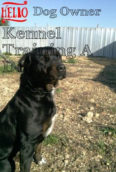 Some Recommendations On Kennel Training A Dog For Pet Buyers And also Owners. *** You can get more details by clicking on the image.