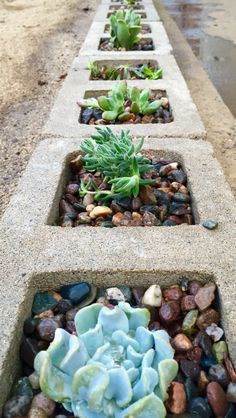 A really attractive inexpensive border. Cinder blocks as a succulent planter.
