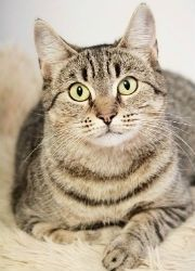 Possum,Female,Domestic,1 year approx TO ADOPT