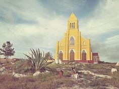 The majority of the inhabitants of Curaçao are Roman Catholic, so yellow churches like St. Willibrordus are a common sight on the island.