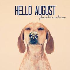 Que agosto traga boas energias e surpresas para todos! Seja bem vindo! #Fashionlearn #CursosOnline #ComunidadeCriativa #August #NovasOportunidades