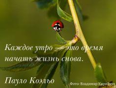 Доброе утро, друзья. Отличного вам настроения на весь день. Помните, что необходимо следить за своим здоровьем и правильноп питаться. www.eco-eda.ru