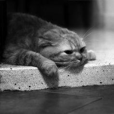 deprese Cats, Animals, Gatos, Kitty Cats, Cat Breeds, Kitty, Cat, Kittens