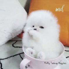cute teacup puppies Happiness is puppy in a cup! Cute Fluffy Dogs, Cute Small Dogs, Cute Baby Dogs, Baby Animals Super Cute, Cute Little Puppies, Cute Dogs And Puppies, Cute Little Animals, Cute Funny Animals, Tiny Puppies