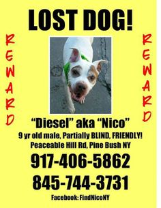 Diesel is a 9 year old male pit bull mix. Diesel is PARTIALLY BLIND. He was just adopted and does NOT know the area. He got out of his new home on 10/23/13. He is micropchipped and was wearing a collar with tags. Last seen: Peaceable Hill Rd, Pine Bush NY, 12566. Please call with any information!! 845-744-3731 www.facebook.com/...
