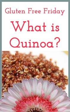 """What is Quinoa?"" Quick guide on this nutritious seed; tastes similar to rice or couscous."