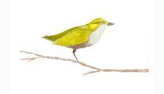 """""""tweet"""" watercolor by Laura Gunn"""