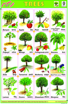 Indian Book Depot - Educational Charts Learning English For Kids, English Lessons For Kids, Learn English Words, English Study, Trees Name In English, Animals Name In English, General Knowledge For Kids, Preschool Charts, Preschool Worksheets