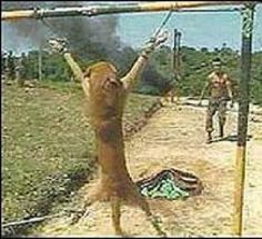 End animal torture in USA military training: Co-Sponsor H.R. 4269, the BEST Practices Act (Fucking bitches)