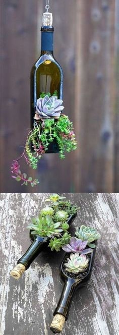 Use a wine bottle to create a hanging or tabletop succulent garden. Perfect for home decor or a special occasion (like a wedding!)