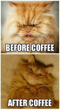 Before vs after coffee - cat meme - http://jokideo.com/before-vs-after-coffee-cat-meme/