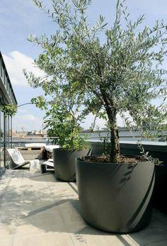 Terrasse gestalten mit großen Blumentöpfen Olivenbäume