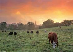 Waking up: Another beautiful sunrise scene in Malmesbury. Mr Peel has dedicated himself to capturing glorious views of his home village thro...