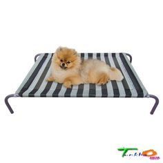 Allmax Small Beds Dogs Puppies Pets Elevated Mesh Fabric Steel Frame Ground Cool #Allmax