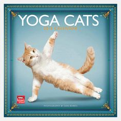 Yoga Cats 2013 Calendar, $13.50, now featured on Fab.