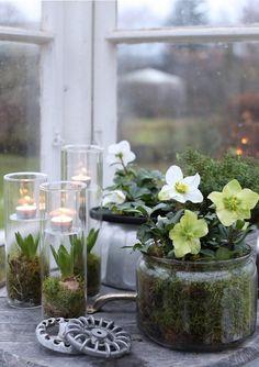 Jouluun valmistautumisessa on ehdottomasti ihaninta kukkaistutusten tekeminen. Tämä henkilö ei malta pitää näppejä pois mullasta, ei sitten millään!