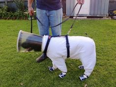 Bazz the beekeeping dog creates a buzz with outfit designed to ...