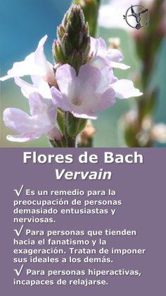 #flores #de #bach #vervain #para #la #ansiedad #los #nervios #niños #hiperactividad #beneficios #en #español #terapia #terapias #alternativas #remedios #frascos #infografia #ilustraciones #imagenes