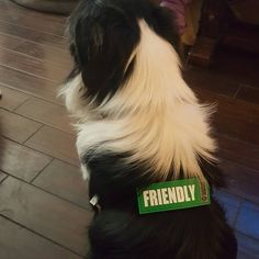 Canine Friendly Bark Notes Patch for Collar or Leash Pet Supplies, Your Dog, Patches, Notes, Instagram Posts, Animals, Animais, Report Cards, Animales