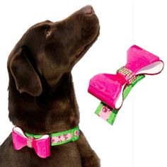 """Your pooch looks oh-so-purdy when she in her """"Hey Doll collar"""". An ultra-durable suede-like fabrication boasts a bold and colorful pattern, as well as adjustability and a clasp closure for a secure fi"""