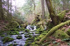 Explore the best bits of Vancouver Island while trekking these 10 hiking trails near Victoria. Vancouver Hiking, Vancouver Island, Victoria Island Canada, Best Camping Lantern, Sequoia National Park Camping, Camping In North Carolina, Victoria British Columbia, Yellowstone Camping, Camping World