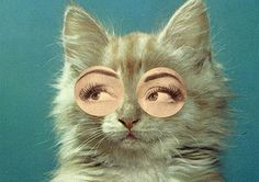 """""""What?! Humans do cat eyes all the time..."""""""