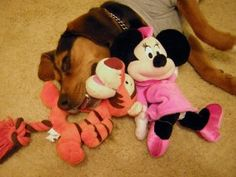 Sponsored by Petsmart, Candy Meets Minnie Mouse and Tiger, worn out from a fun day of play, http://beagledaily.com/candy-meets-minnie-mouse-and-tiger-from-petsmart-disney-line-for-dogs/  #Petsmart #DisneyLine