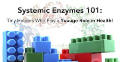 Enzymes are required as catalysts for almost every function in the human body, so it's no wonder that systemic (or proteolytic) enzymes have been used by functional health practitioners for decades to help people with a wide range of symptoms and conditions. While they've regularly been used for decades in the rehab, recovery, and pain …