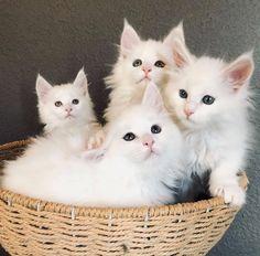 Mama Cat, Cats And Kittens, Cute Cats, Cute Animals, Kawaii, Gatos, Cutest Pets, Pretty Cats, Pretty Animals