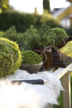 beautiful moss arrangements