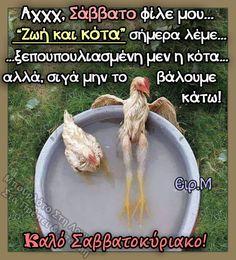 Yolo, Good Morning, Mornings, Funny, Easter, Humor, Buen Dia, Bonjour, Acre