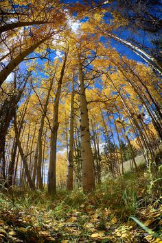 Fall Colors in Summit County Colorado